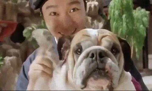 Tình yêu cảm động của Châu Tinh Trì với chú chó cưng - ảnh 1