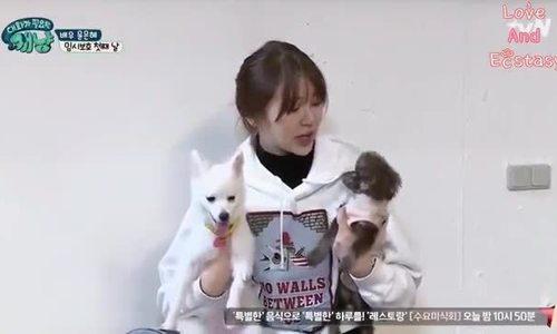 Yoon Eun Hye dạy bảo những chú cún
