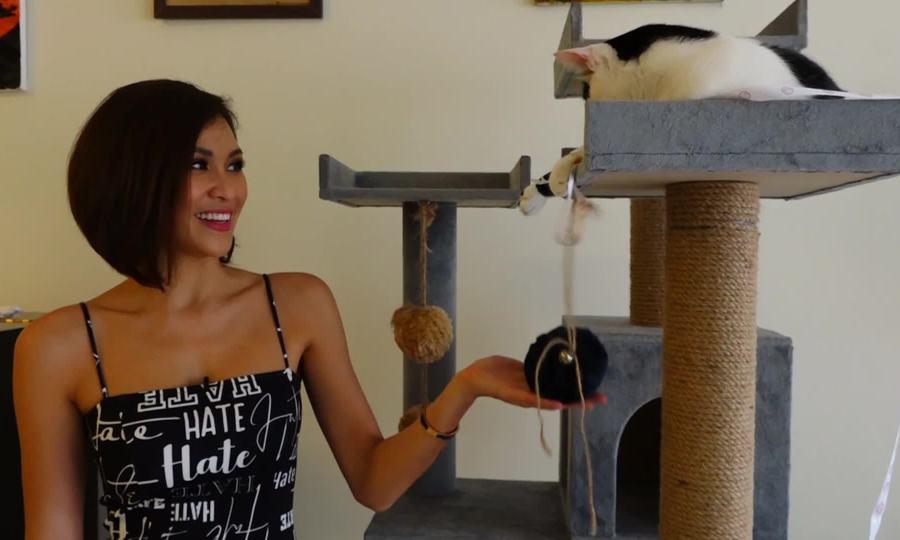 Phương Mai sống cùng đàn mèo