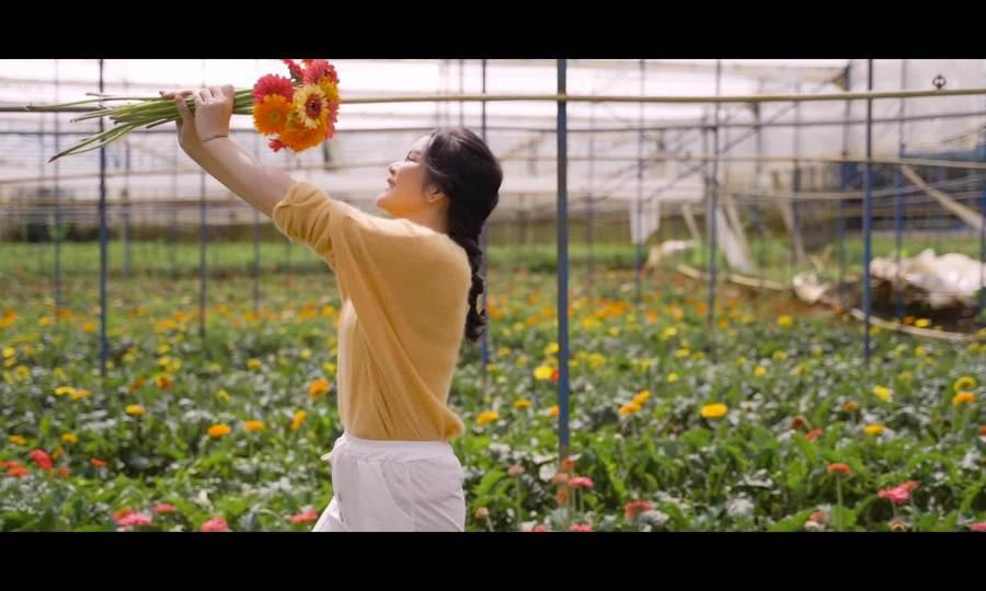 Lý Nhã Kỳ thu hoạch hoa ở Lâm Đồng