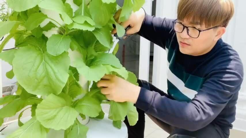 Vườn rau trên sân thượng của Đại Nghĩa