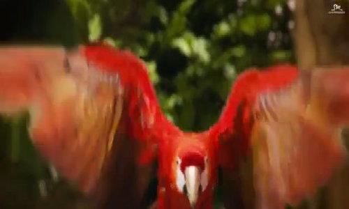 MV sử dụng nhiều kỹ xảo của Red Velvet