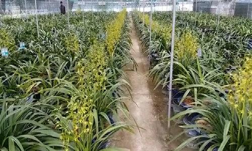 Vườn hoa lan Hoàng Vũ tư nhân lớn nhất Việt Nam