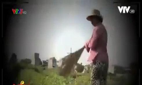Nông dân dùng chổi quét rách rau để lừa người mua