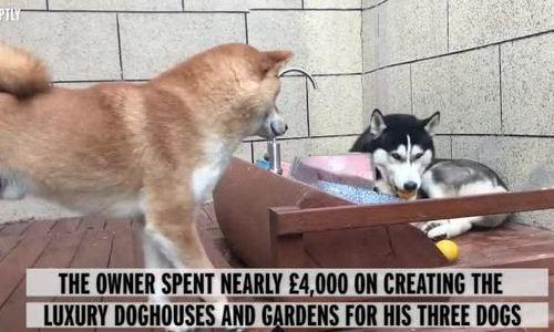 Chủ xây biệt thự có cửa tự động và spa cho ba chó cưng