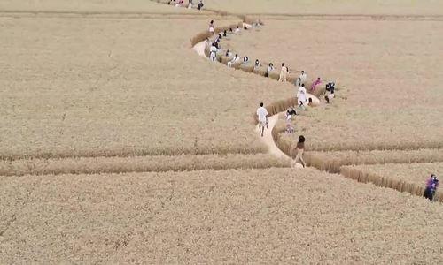 Jacquemus làm show trên đồng lúa