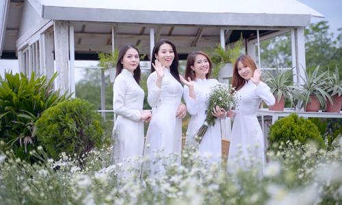 Vườn cúc họa mi nở sớm ở Hà Nội