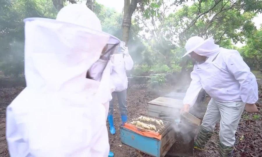 Ngọc Trinh đi xem nuôi ong ở Tam Đảo