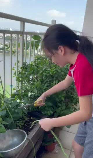 Con trai Hồng Nhung thu hoạch rau