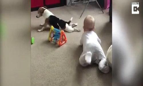 Cún cưng dạy em bé tập bò