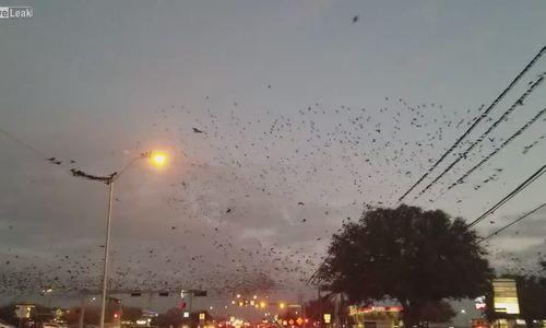 Đàn chim bay kín trời