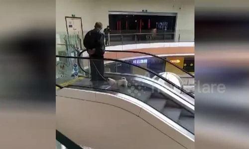 Dắt chó đi bộ trên thang cuốn