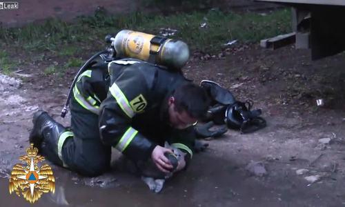 Video lính cứu hỏa cứu mèo nhận triệu lượt xem - ảnh 1