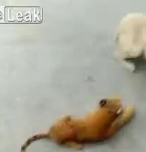 Video dùng lạc đà phun khử khuẩn gây tranh cãi trên Internet - ảnh 9