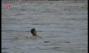 Dân liều mình vớt gỗ giữa dòng nước lũ