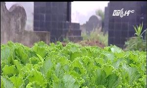 Vườn rau xanh tươi ở nghĩa địa