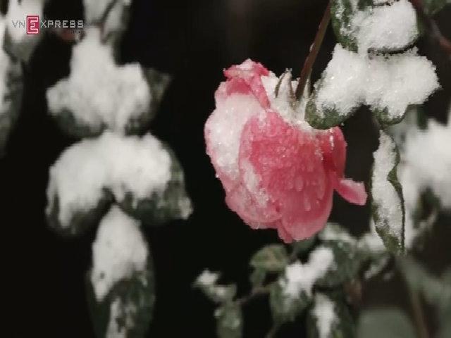 Thị trấn Sapa chìm trong màu trắng của mưa tuyết