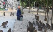 Người đàn ông gần 30 năm sống chung với 1.300 con khỉ