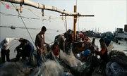 Ngư dân Hải Phòng thu hoạch tôm cá đầy tàu sau ngày đầu ra khơi