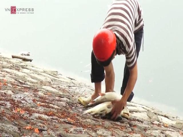 Cá sắp chết ở hồ Hoàng Cầu được người dân vớt về nấu năn