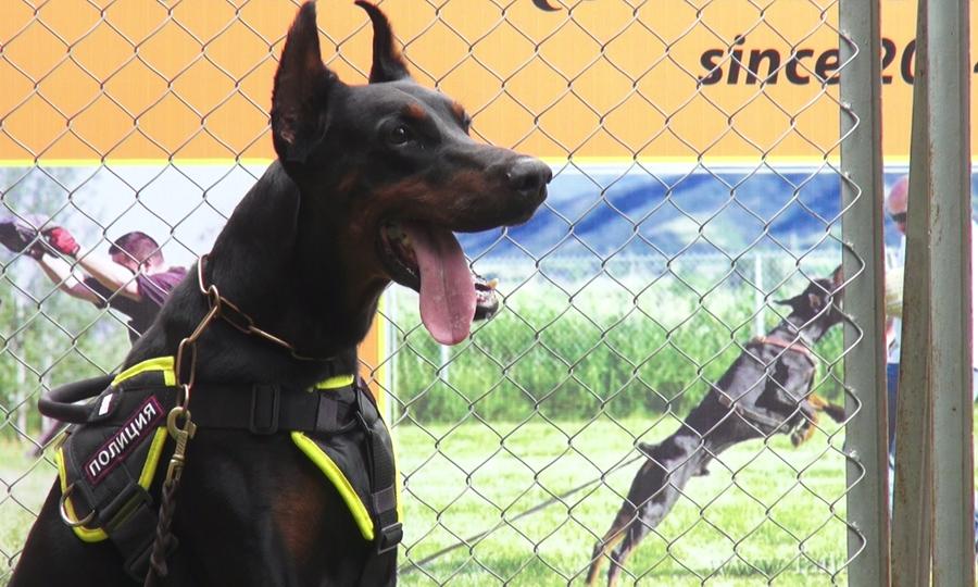 8x kiếm tiền tỷ nhờ nuôi, huấn luyện chó