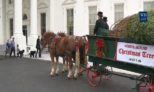Bà Obama đón cây thông Noel Nhà Trắng lần cuối cùng