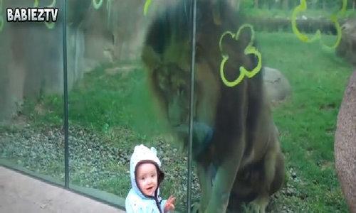 Cậu bé hồn nhiên tươi cười khi chơi đùa cùng sư tử