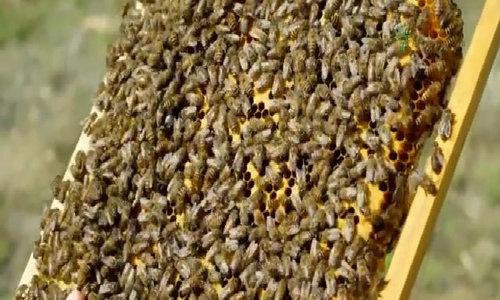 Nuôi ong nội cho thu hoạch 5.000 lít mật mỗi năm