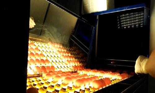 Quy trình xử lý 65.000 quả trứng sạch mỗi giờ