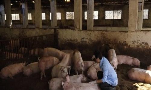 3 mô hình sản xuất hữu cơ điển hình trong nông nghiệp