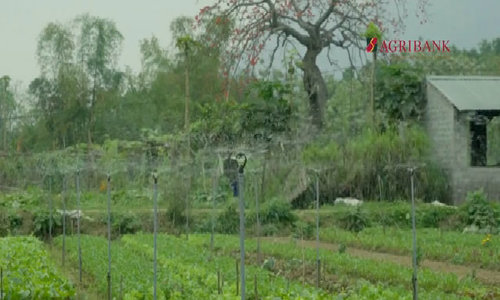 Ba mô hình sản xuất hữu cơ điển hình trong nông nghiệp