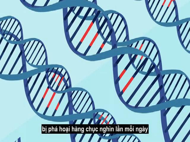 Điều gì xảy ra khi ADN bị hư hại?