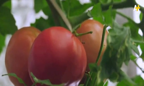 Người Nhật trồng 280 loại cây trong văn phòng