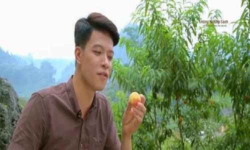 Vườn đào chín mọng hút khách du lịch đến Mộc Châu