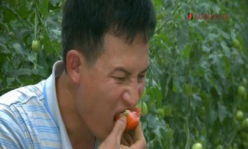 Thạc sĩ kiếm tiền tỷ nhờ vựa cà chua lớn nhất đất Mộc Châu