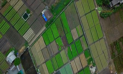 Mô hình trồng rau sạch tại Bà Rịa Vũng Tàu