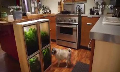 Chiếc tủ mini trồng rau không cần tưới bón