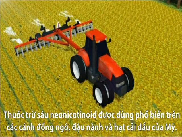 Ong chúa nhiễm thuốc trừ sâu giảm khả năng đẻ trứng