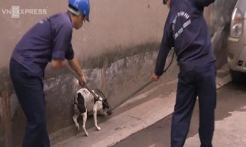 Bắt chó thả rông ở Sài Gòn, chủ không đến nhận sao lại giết?
