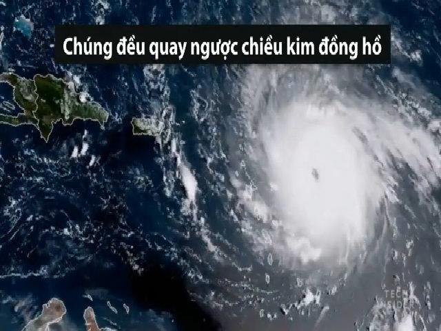 Vì sao các cơn bão luôn quay ngược chiều kim đồng hồ?