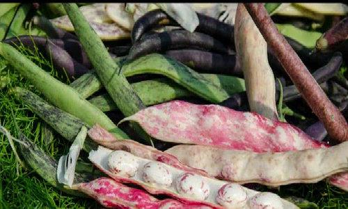 Nông trại trồng rau cho đầu bếp khó tính nhất nước Mỹ
