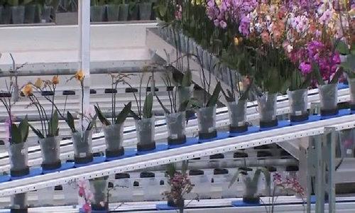Nhà kính hiện đại 15ha trồng hoa tại Ba Lan