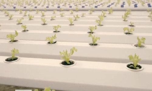 Nông dân dành 6 tỷ đồng trồng rau thủy canh