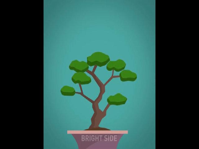 Quy trình trồng và tạo dáng cây bonsai