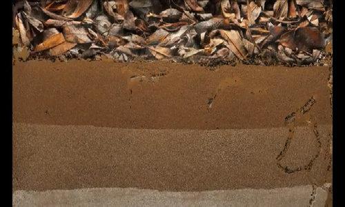 Giun đất có thể sinh trưởng tốt trong đất sao Hỏa