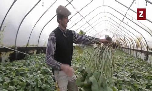 Cặp vợ chồng dày công nghĩ kế trồng wasabi Nhật trên đất Mỹ