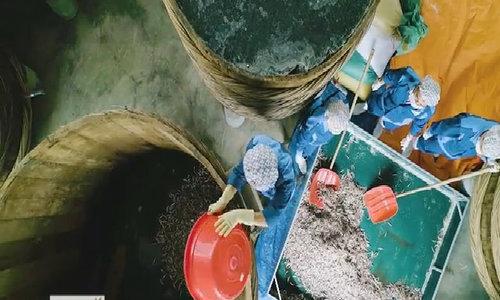 2 năm biến cá cơm thành nước mắm đảo Mê