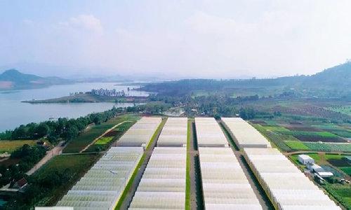 Vùng rau công nghệ cao 110ha tại Nghệ An
