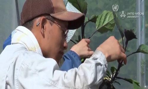 60 gia đình Nhật rủ nhau bỏ phố về quê làm nông