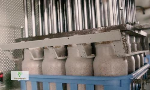 Nữ phiên dịch đầu tư 3 triệu USD trồng nấm theo công nghệ Nhật